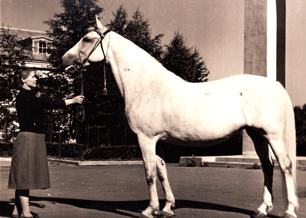 Орловский рысак, 1946 год