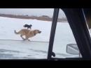 Зимний дрифт с собаками