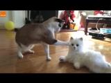 Реакция котов на игрушечную кошку