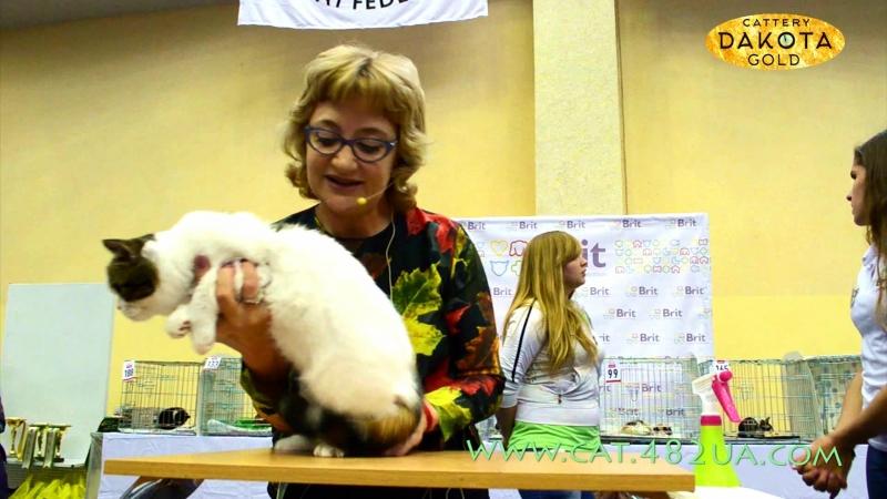Ринг юниоров и взрослых котов, Харьков, Международная выставка кошек и котов, 18 сентября, 2016, 3