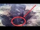 Elefant buddelt 11 Stunden in einem Loch was er herausholt ist unglaublich!