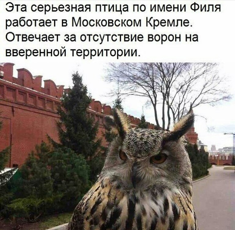 https://pp.userapi.com/c834400/v834400870/10c43/QEm-DXh-tNU.jpg