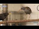 Травмовані тварини та птахи знайшли свій дім у Харківському зоопарку