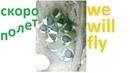 Птенцы синицы за несколько часов до вылета из дома - Parus major - babies great titmouse - Kohlmeise Meisen - mésange - sýkorka -シジュウカラ 四十雀