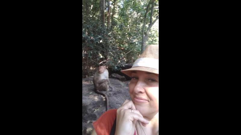 Хитрые обезьянки Гоа