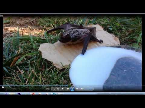 Летучие мышата