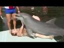 Мачо дельфин!)
