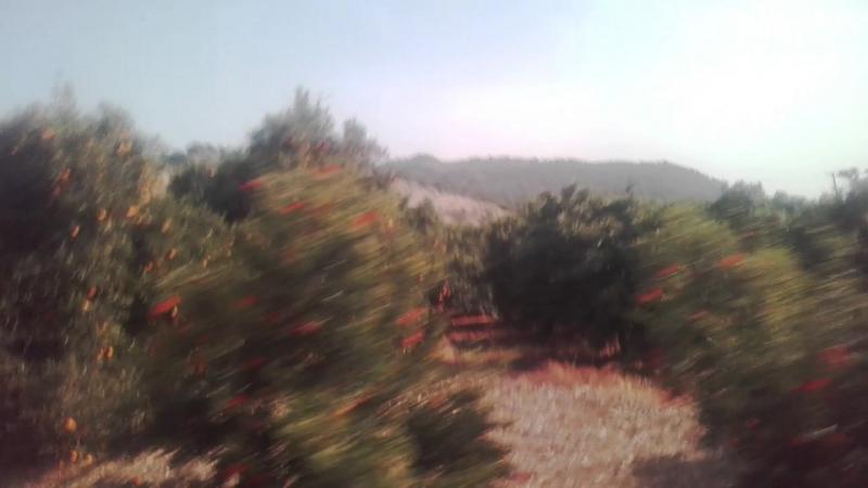 Апельсиновве плантации.Кипр.