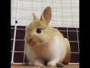 Кроля мило жует