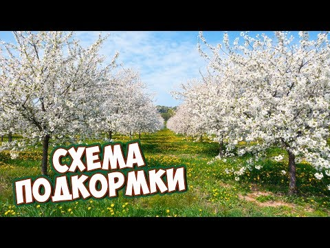 Подкормка садовых культур 🌱 Схема внесения удобрений по месяцам. прямой эфир Хитсад ТВ