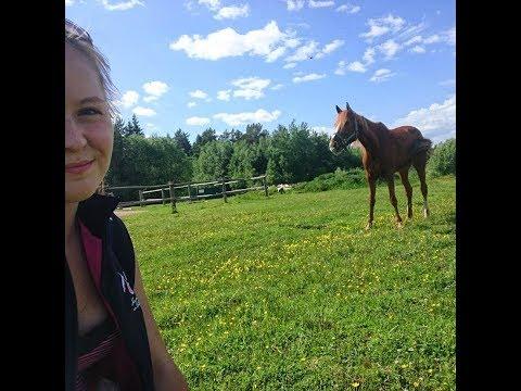 Хороший день с любимой лошадью:3