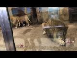 Зоопарк Питер