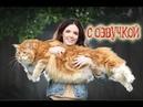 Приколы с котами с озвучкой – Смешные коты и кошки 2018 от Domi Show