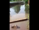 Шарья затопило улицу Орджоникидзе
