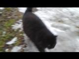 Наша кошка Цыганка.