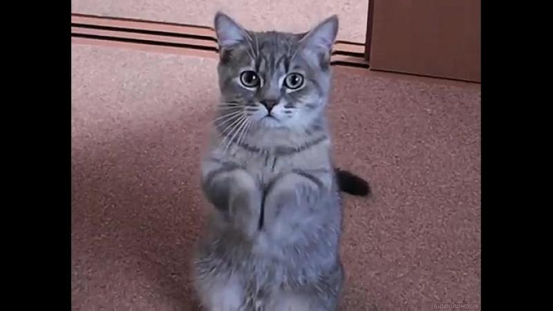 котик мой любимый