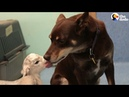 Dog Takes Care Of The Baby Animals On Farm | The Dodo