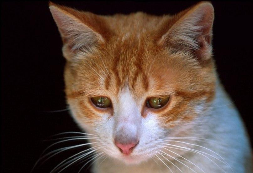 Кошки плачущие картинки