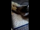 Постирушки кота Мифодия