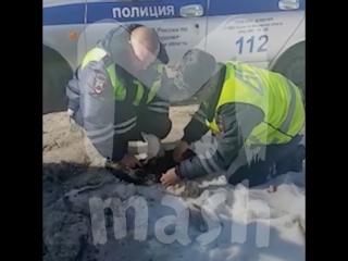 Гаишники спасли собаку, раненную стаей бродячих псов