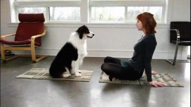 Дрессированая собака.