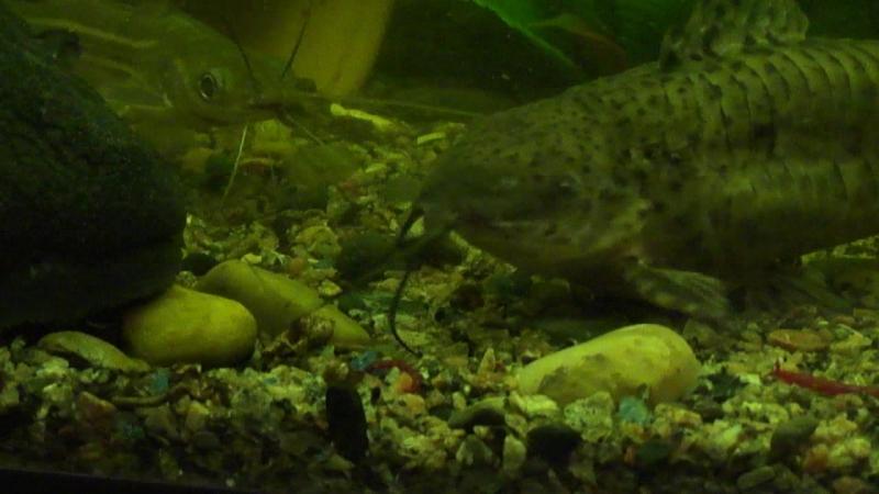 Рыбки и червячки