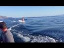 Морские души