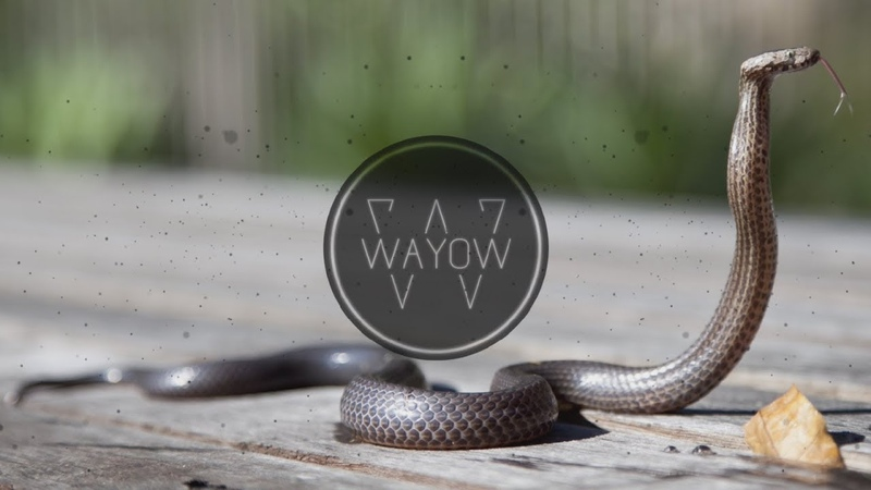 WAYOW - SNAKE CHARMER (Oriental Arabic Trap Beat Instrumental)