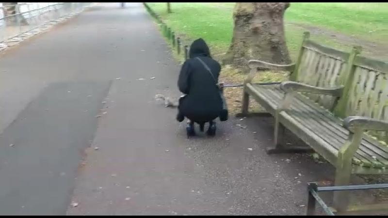 Белки в Лондоне ❤🐿