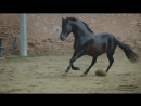 Вдруг это Ваша личная лошадь