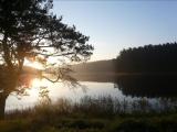 Поль Мориа-Одинокий пастух-на пруду утром