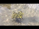 И еще раз о морских огурцах