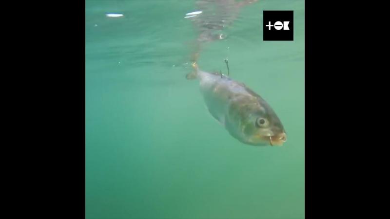 Ловим рыбу на зомби-наживку