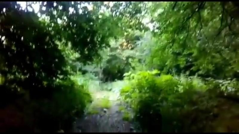 Вот сейчас настало время надеть наушники, остановиться и послушать как в нашем, Женевском, лесу поют птицы! Просто наслаждение и