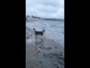 пляж Омега. Охота на уток