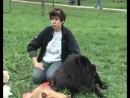 Представляем породу собак ЧАУ ЧАУ