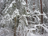В.Наумов. Прогулка по зимнему лесу.