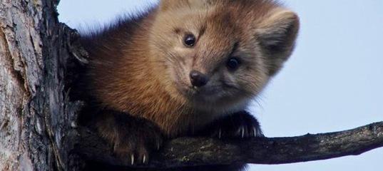 Усть-Илимский суд взыскал 418 тыс. рублей за уничтожение мест обитания животного мира