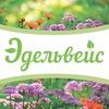 Эдельвейс - Растения и уход за ними