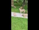 Video-1526986616.mp4