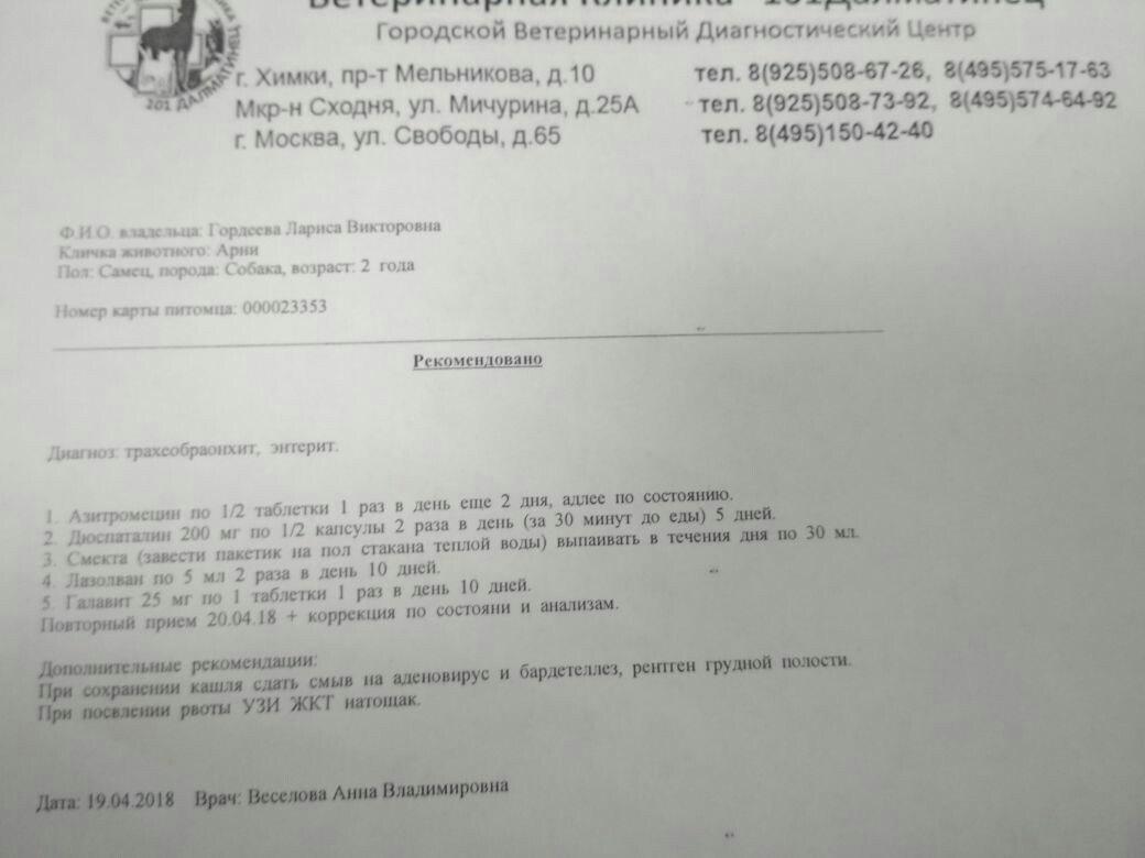Москва, Арни, кобель, 06.10.16. - Страница 6 C-I0F1uJ9NM