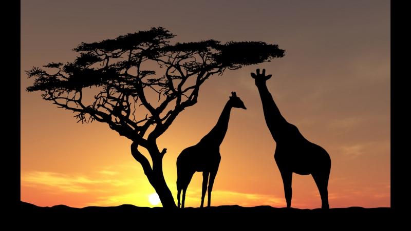Климат Африки - География 7 класс 22 - Инфоурок