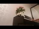 George Michael - Careless Whisper-Piano