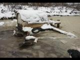 адаптация южных уток к холодному климату