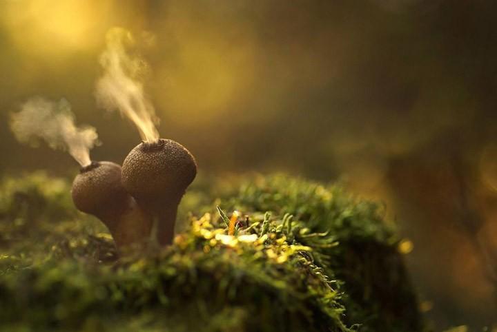 Интересные факты о грибах.