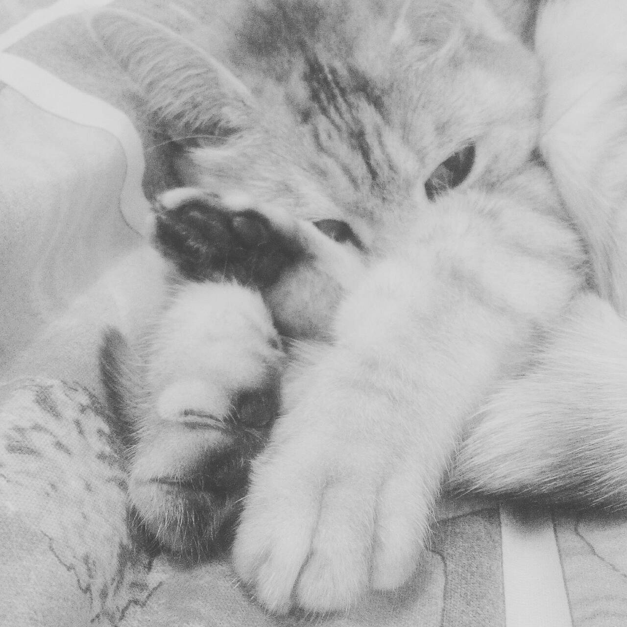Шерстяная кошка