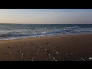 Vena portae — coral (sasha malkovich remix)