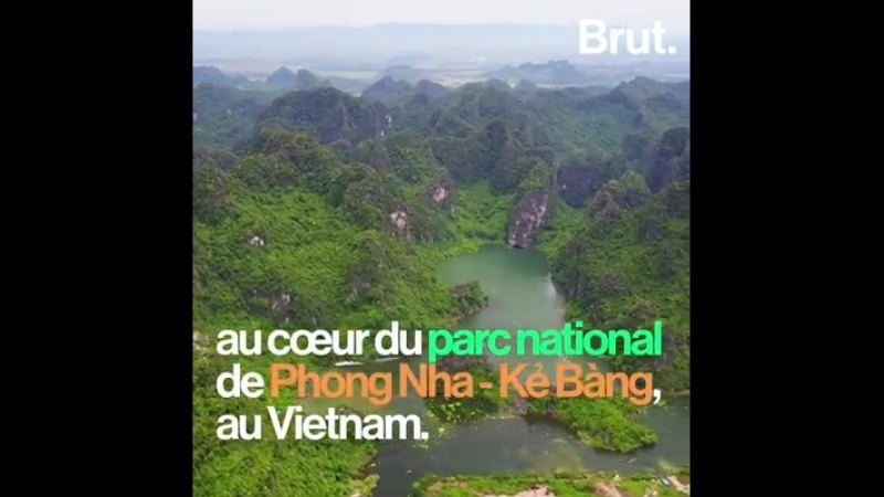 Cette grotte vietnamienne est si grande quelle accueille sa propre jungle et possède son propre micro-climat