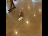 Собака выгуливает щенка