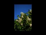 2017-06-06 7ая часть по большаку и Рыженино Столяров Виктор А Super Instrumental Music - Collection -2015 CD1 Песни 1ая 3ая 5ая